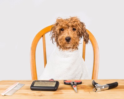 Garner can teach you how to get rid of pet dander with the right tools and cleaning.